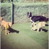 Hotelzinho de cão em Cotia