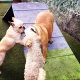 Hotelzinho para cachorro pequeno em Cajamar