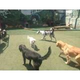 Hotelzinho para cachorro SP
