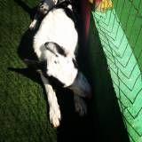 Hotelzinho para cães na Vila Mariana