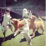 Hotelzinho para cães no Jardim Europa