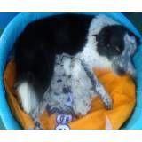 Hotelzinho para cães no Sacomã