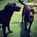 Hotelzinho para cão  em Interlagos