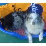 Hotelzinho para cão no Sacomã