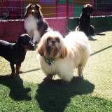 Hotelzinhos para cães na Vila Leopoldina