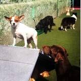 Lar canino na Vila Leopoldina