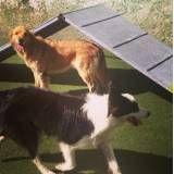 Lazer cães no Rio Pequeno