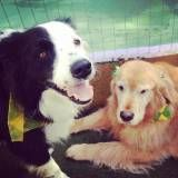 Melhor hotel para cães no Jardim São Luiz