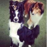 Onde achar adestrador de cão no Jardim São Luiz