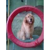 Onde achar adestrador para cachorro no Itaim Bibi