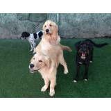 Onde achar adestrador para cachorros no Rio Pequeno