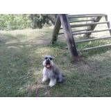 Onde achar adestrador para cães no Sacomã