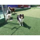 Onde achar adestrador para cão em Cajamar