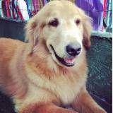 Onde achar adestradores para cachorro em Interlagos
