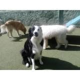 Onde achar adestradores para cachorro no Pacaembu