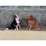 Onde achar adestradores para cães no Jardim Europa