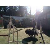 Onde achar adestramento de cachorro em Santo Amaro