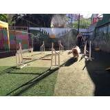 Onde achar adestramento de cães na Lapa