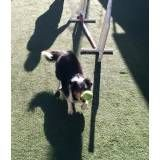 Onde achar adestramento de cão na Vila Mariana