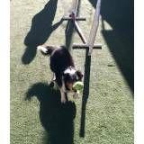 Onde achar adestramento de cão no Aeroporto