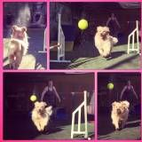 Onde achar adestramento para cachorro na Pedreira