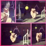 Onde achar adestramento para cachorro no Jockey Club