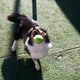 Onde achar adestramento para cachorros no Jardim Bonfiglioli