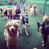 Onde achar creche cachoro  no Pacaembu