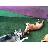 Onde achar creche de cachorro no Sacomã