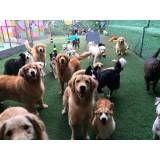Onde achar creche de cachorros no Ibirapuera