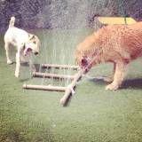 Onde achar creche de cachorros no Jockey Club