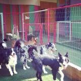 Onde achar creche de cães no Rio Pequeno