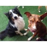 Onde achar creche de cão em Raposo Tavares