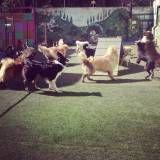 Onde achar creche de cão no Ibirapuera