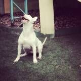 Onde achar creche para cachorro na Cidade Ademar