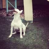 Onde achar creche para cachorro no Ibirapuera