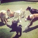 Onde achar creches cães na Pedreira