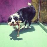 Onde achar creches de cachorro no Jardim Bonfiglioli