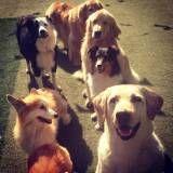 Onde achar creches de cachorro no Jardim Europa