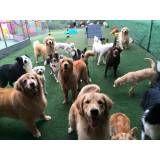 Onde achar creches de cachorros no Aeroporto