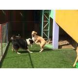 Onde achar creches de cachorros no Jardim Europa
