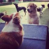 Onde achar creches de cão  no Ibirapuera