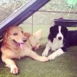 Onde achar creches para cachorro no Sacomã
