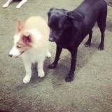 Onde achar creches para cachorros no Jardim América