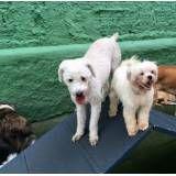 Onde achar creches para cachorros no Jockey Club