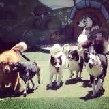 Onde achar creches para cães em Jandira