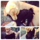 Onde achar creches para cães no Jardim Paulista