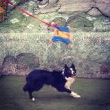 Onde achar creches para cão  em Osasco