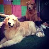 Onde achar Daycare canino no Jardim América