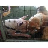 Onde achar Daycare de cão  na Cidade Dutra